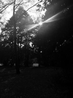 brezový hájik čb