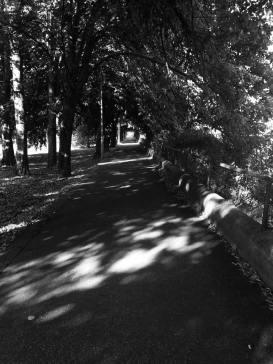 čiernobiela cesta na rieke stromy