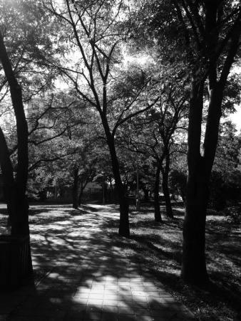 trees- botan
