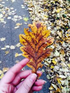 brown leaf in my hand